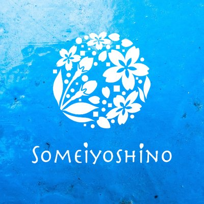 Web制作スタジオSomeiyoshino